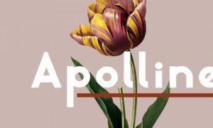 فونت انگلیسی Apolline
